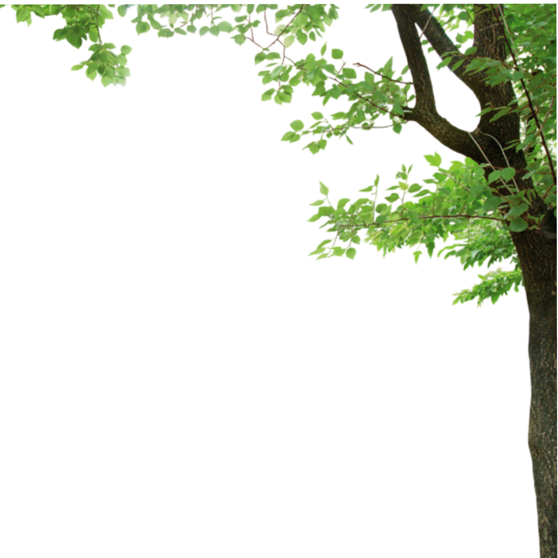 Photo Frame Tree Decoration