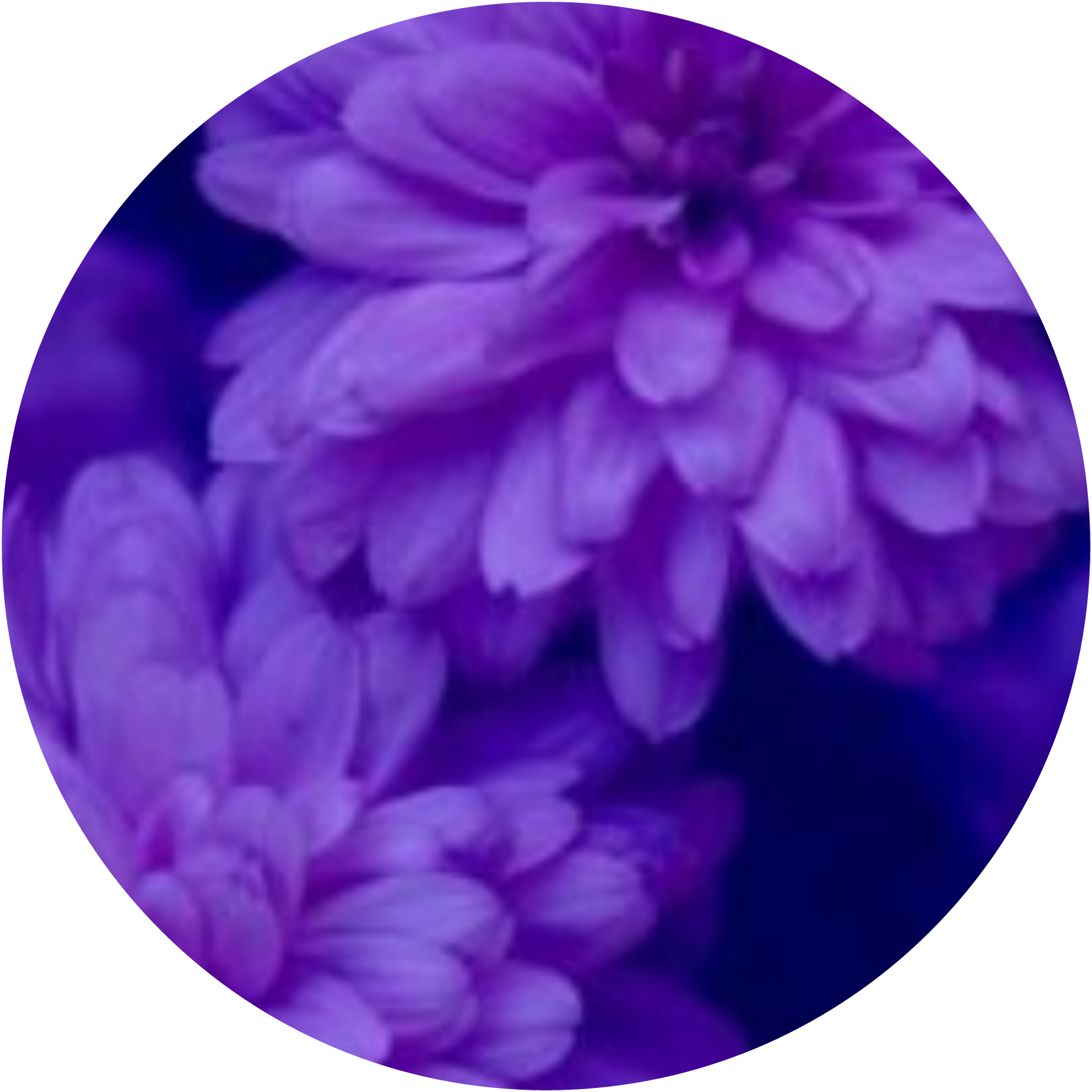 circle png tumblr aesthetic flower quotes remixit circu