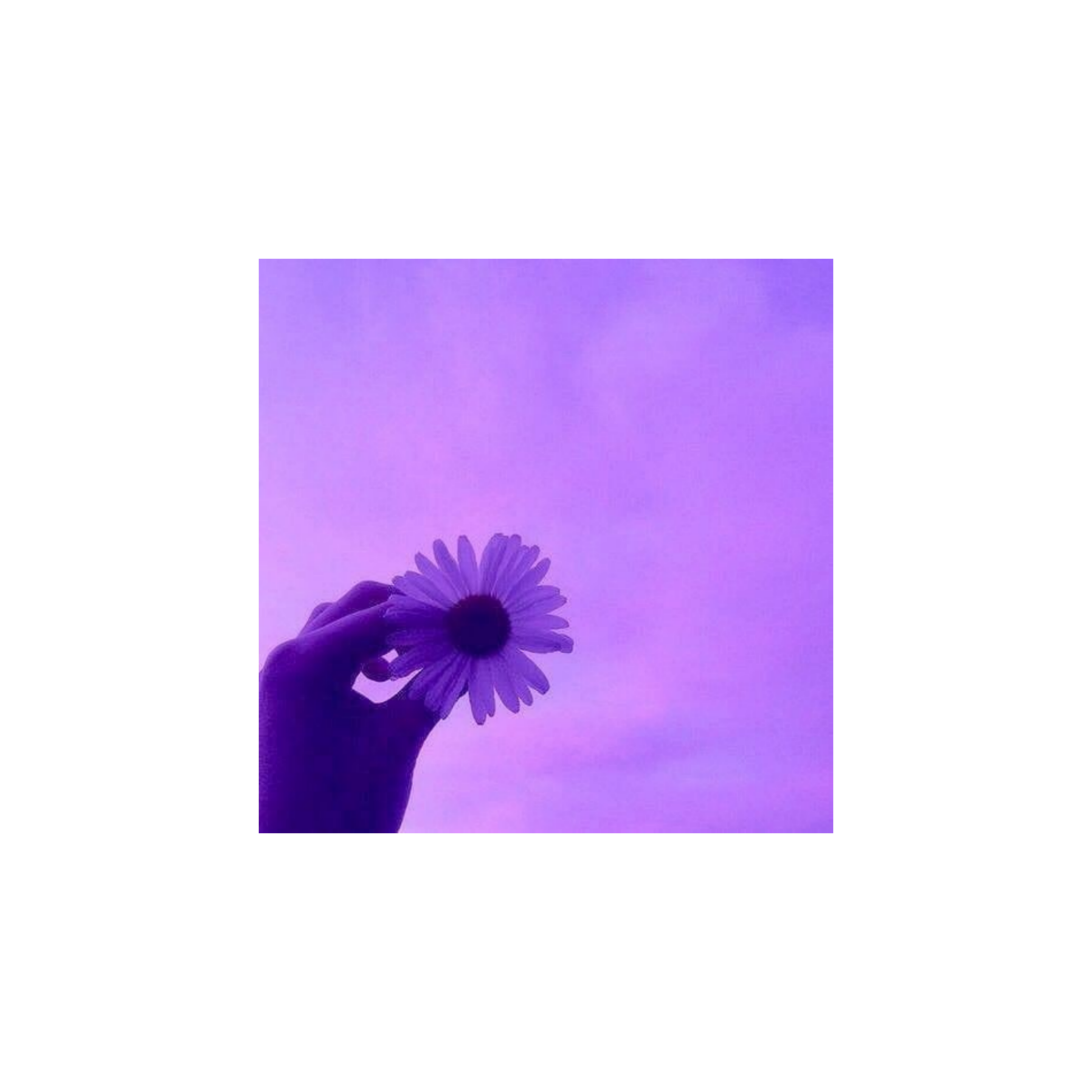 Pink and purple aesthetic