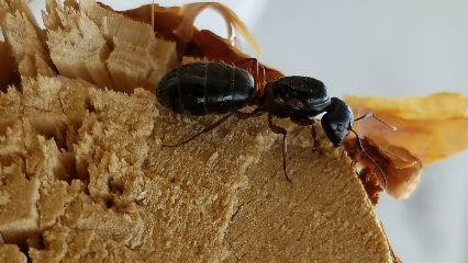 freetoedit nature ants wood outdoors