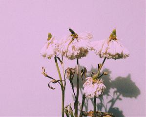 freetoedit minimal flower minimalism