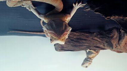 freetoedit photography reptile