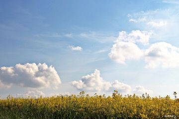 photography myphoto field bluesky hdr