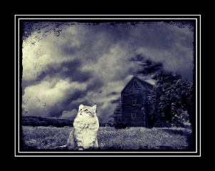 freetoedit cat blackandwhite house darkness