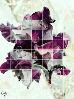 freetoedit flower iris purple