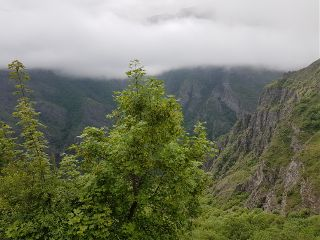 fog nature green tatev