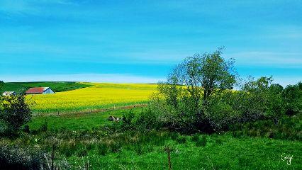 freetoedit oregon farm field yellow