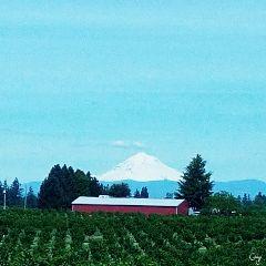 freetoedit mountain oregon zoom farm