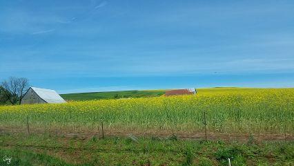 freetoedit oregon farm spring yellow