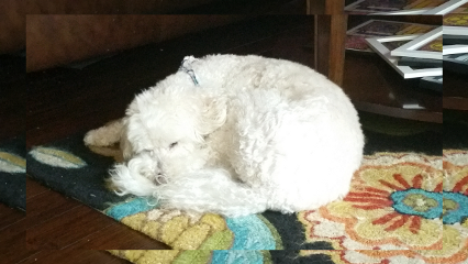 sweetdreams freetoedit dogday