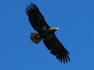photography eagles canada britishcolumbia atmosphere