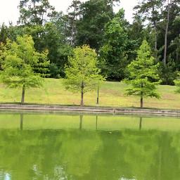 green trees lake