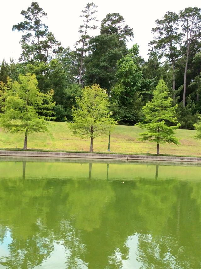 #green #trees #lake