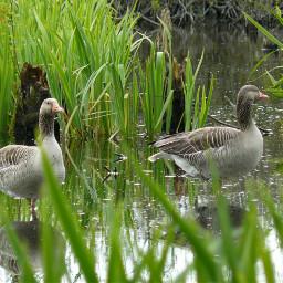 nature nofilter natural bird birds