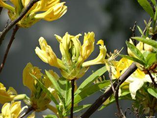 blossem flower yellow nofilter whydosomepeoplehavesomuchtotag