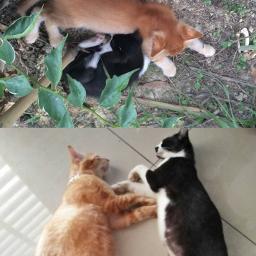 kitten thanandnow freetoedit