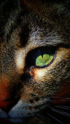 cat myphoto hdr myedit lovecats