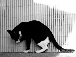 photography blackandwhite petsandanimals mypet cute