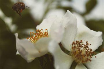 flower animal macro goodbye photography