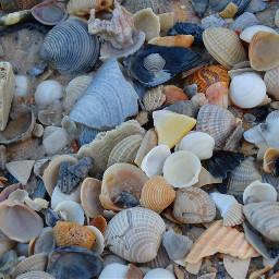 freetoedit alabamabeach seashells gulfofmexico shore
