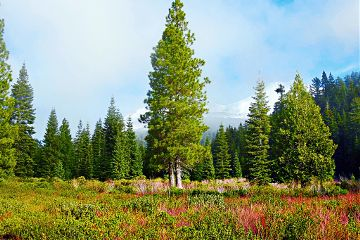 california nature photography mountain mountainview