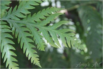 leaves foilage nature green plant