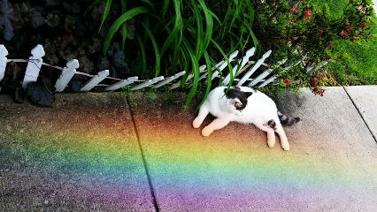 freetoedit rainbowlightcontest