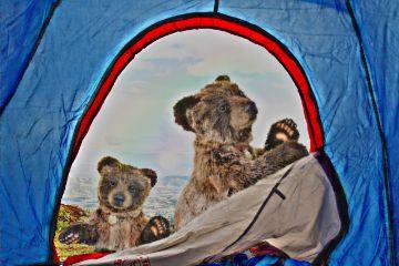 freetoedit baby bears hello food