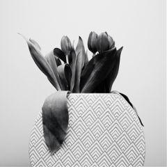 freetoedit blackandwhite flower photography