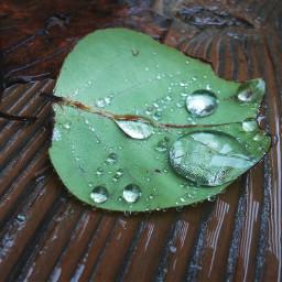 waterdrop rain leaf rainy