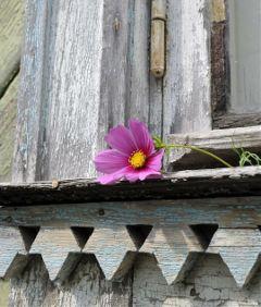 freetoedit vintage flower window