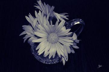 renew edit oldphoto blackandwhite flowers