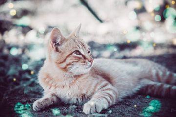 caturday cat psychic fairies