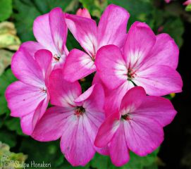 flower photography pink closeup zoom