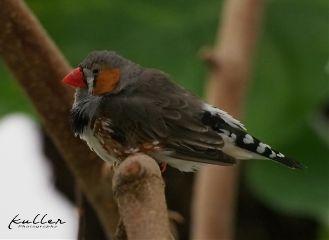 pameeting7 bird nature biosphärepotsdam biosph