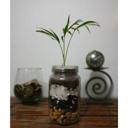 indoorplant indoorgarden freetoedit