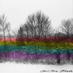 rainbowlightcontest nature trees photography digitalphotography