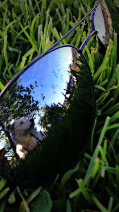 dog mirror dpcsunglasses