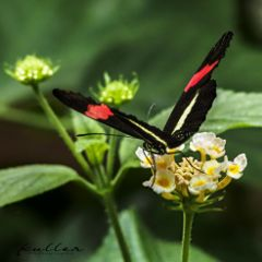 pameeting7 butterfly biosphärepotsdam flower nature