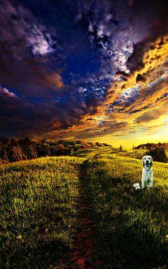 freetoedit nature petsandanimals summer dogs