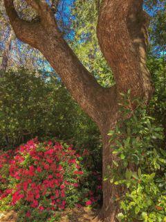 freetoedit nature flowers tree beauty