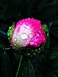 flower raindrops color