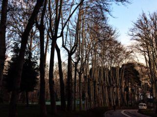 trees iran