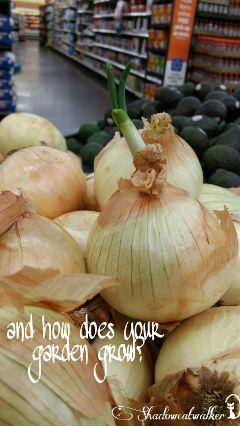 onions yellowonions green growing grow