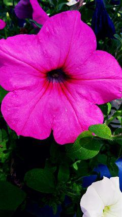 flower vibrant myoriginalphoto beautiful nature freetoedit