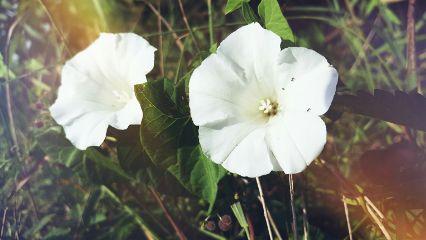freetoedit photography nature flower maskeffect