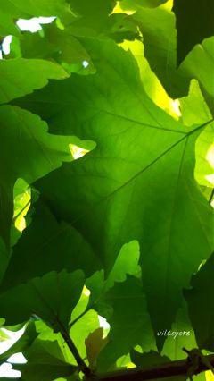 green leafart