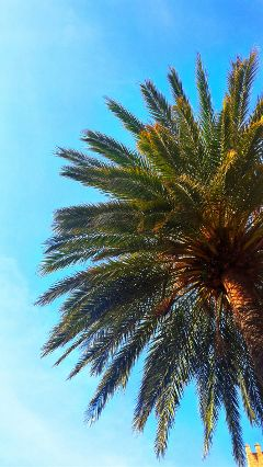freetoedit sky palm