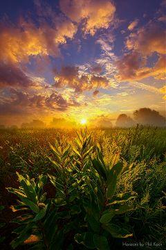 freetoedit nature remixit colorful weather