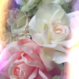 freetoedit. roses flowers pink white freetoedit